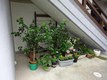 平成30年7月の植木鉢02