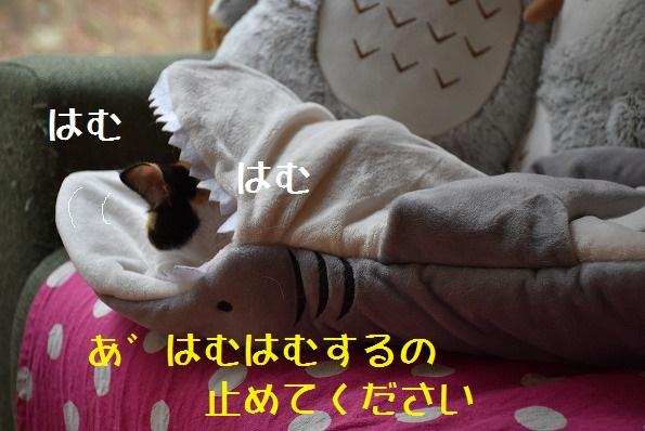 3_20180804005107634.jpg