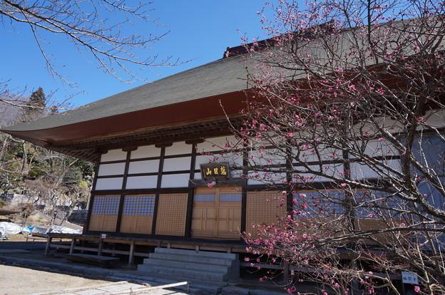 お寺と紅梅