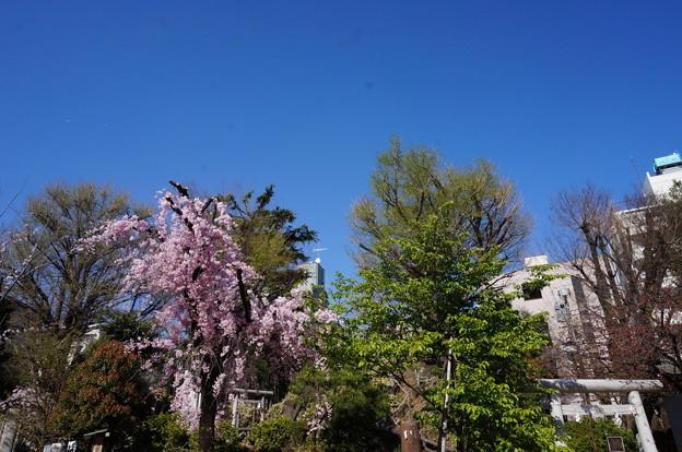 鳩の森神社のお花