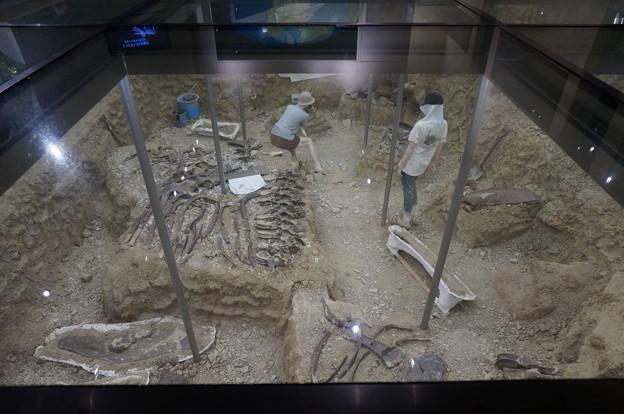 化石発掘現場の再現
