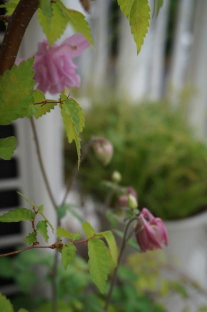 続々と咲く模様(*´艸`*)