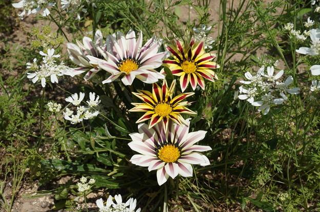 派手な花その1