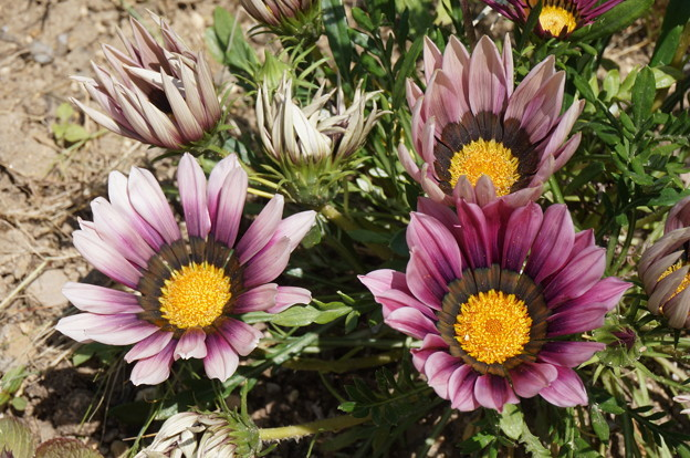 派手な花その2