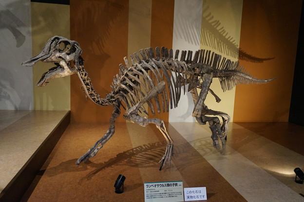 ランベオサウルスの子供