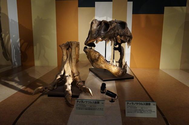 最大の肉食恐竜ティラノサウルス