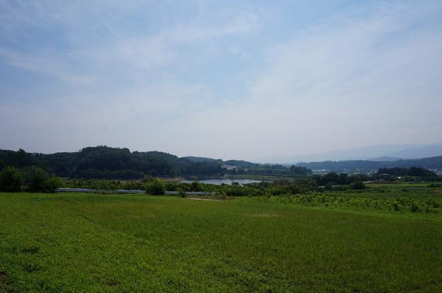 湖が見えます