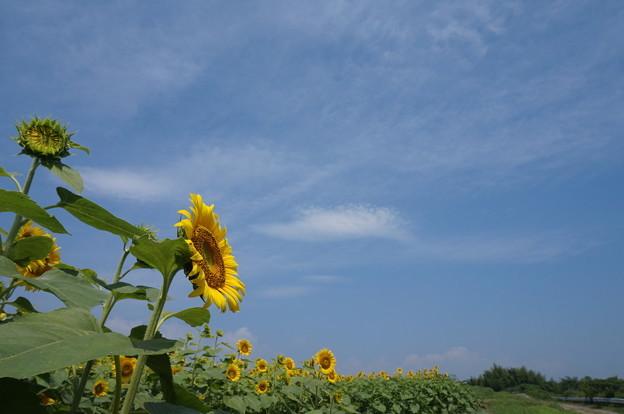 太陽の塔風