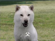 ソフトバンクCM、白戸家の犬のお父さん 日本人差別!詐欺!ソフトバンクのCM。犬のお父さんと黒人のお兄さんは、日本人侮蔑の設定