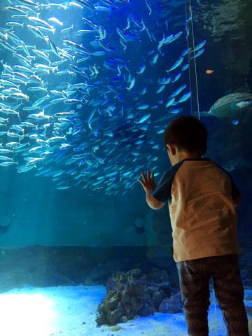 南知多ビーチランド_海洋館の魚たち2018_01