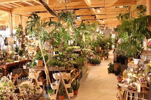 植物園IMG_8612