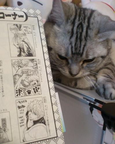 猫 74巻