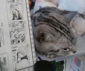 74巻 猫