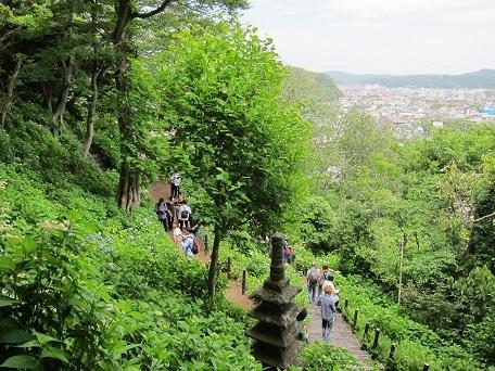 5月鎌倉3
