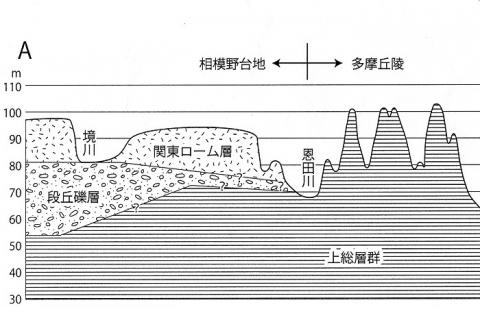 相模原(相模野)台地断面図