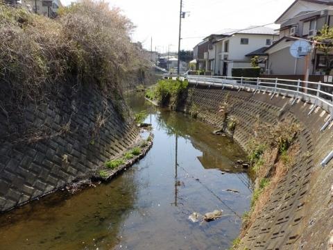 松山橋上流の比留川
