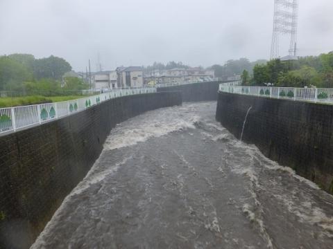 大雨の鳩川・大盛橋下流