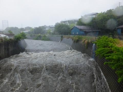 大雨の鳩川・大盛橋上流