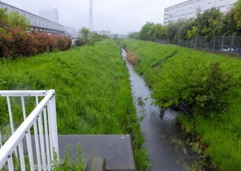 上河原橋より鳩川下流を望む