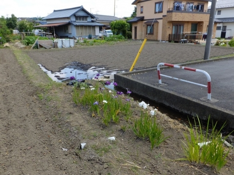 新戸用水路沿いの田んぼ
