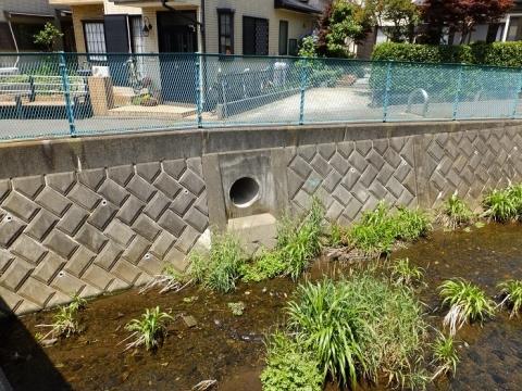 日枝神橋上流側の雨水下水管吐口。