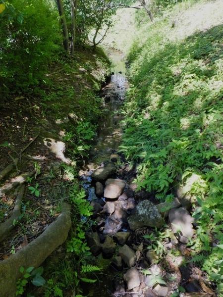 薬師池から始まる用水路・東京都町田市