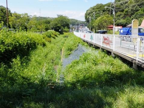 薬師池から始まる用水路