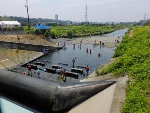 俣野堰の川の生き物観察会