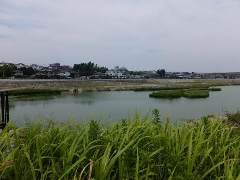 境川の今田遊水地