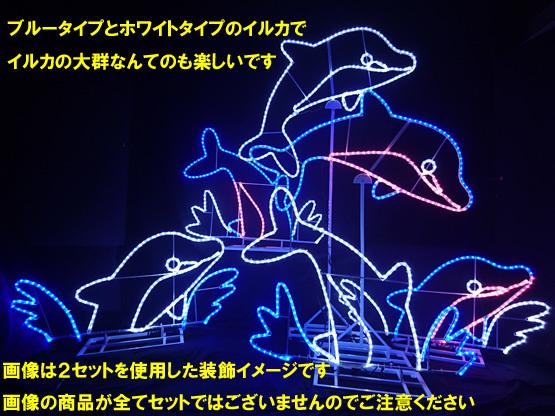 イルカ 大群