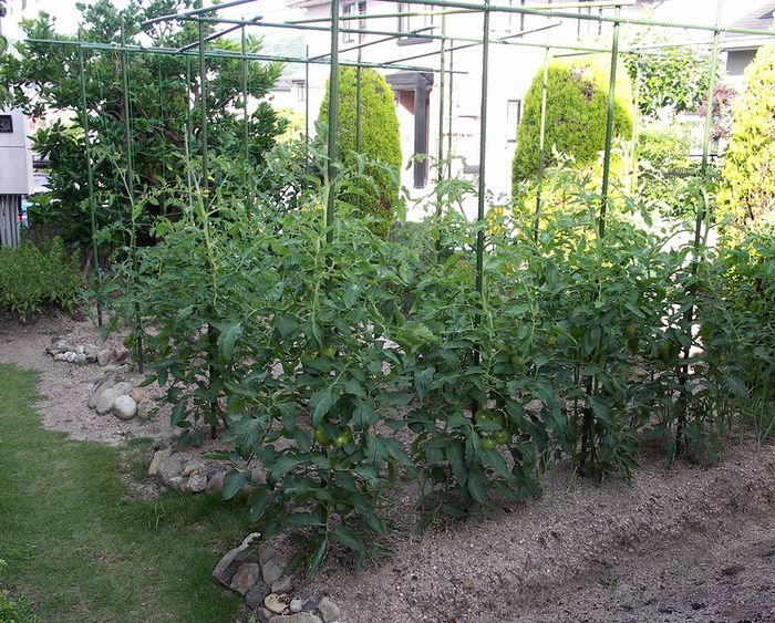 家庭菜園25x4