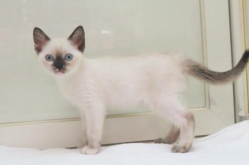 猫MIX0510 (1)