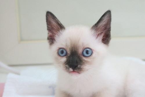 猫MIX0510 (2)