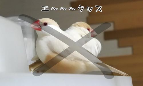 文鳥文字を作りなさい_9