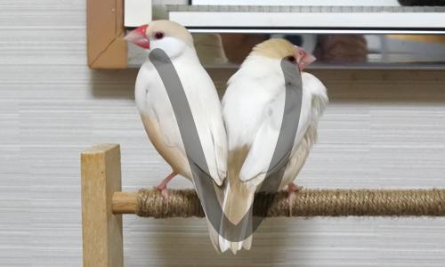 文鳥文字を作りなさい_8