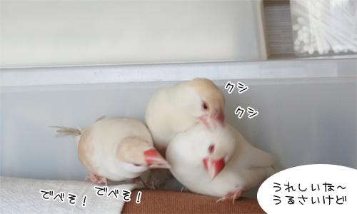 びっくりの顔合わせ_3