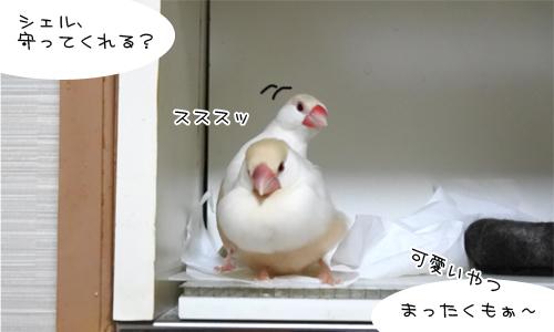 ぴのしゃん、大混乱_4