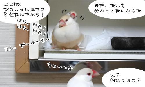 ぴのしゃん、大混乱_5