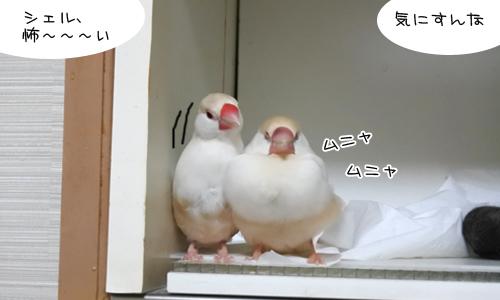ぴのしゃん、大混乱_2