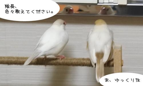 ぴのしゃん、大混乱_6