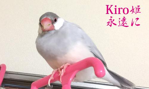 追悼 Kiroちゃん永遠に_3