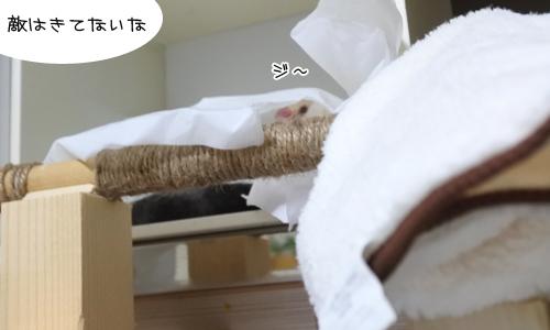 シェル、はんぱね~_1