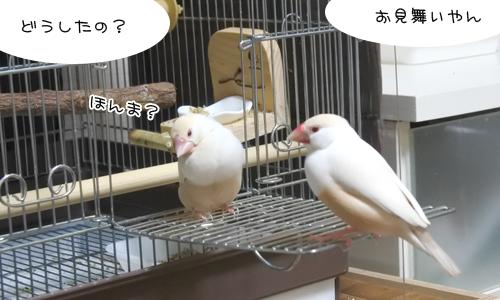 野鳥の姿が見えない_2