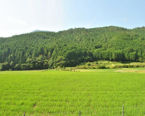 御槇の田園風景