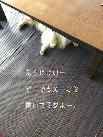 IMG_E9237 (1)