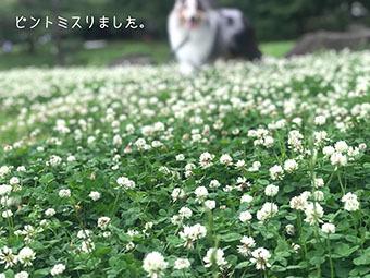 IMG_E8485.jpg