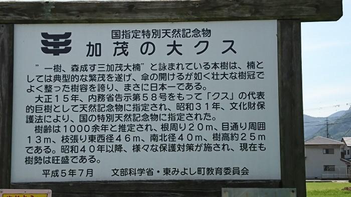 徳島 加茂の大楠