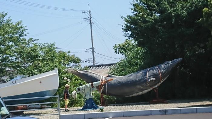 室戸廃校水族館
