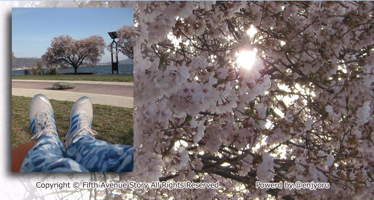 エイプズボンと桜