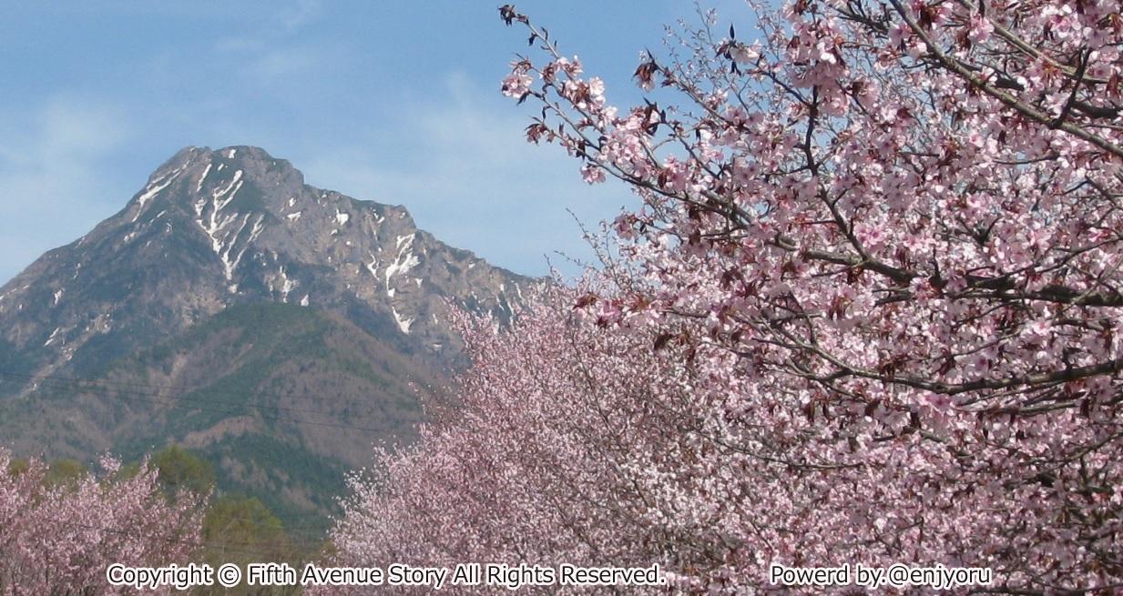 八ヶ岳と桜